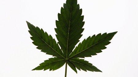 America Wants Marijuana Legalized