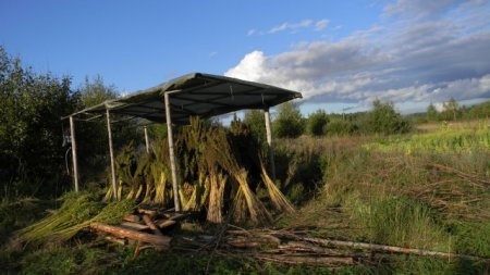Industrial Hemp Cultivation in Minnesota