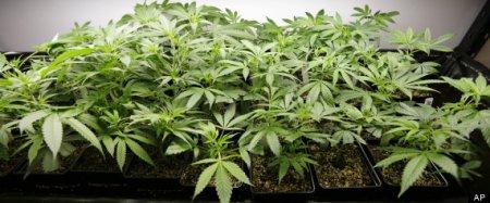 Production Price of Legal Marijuana